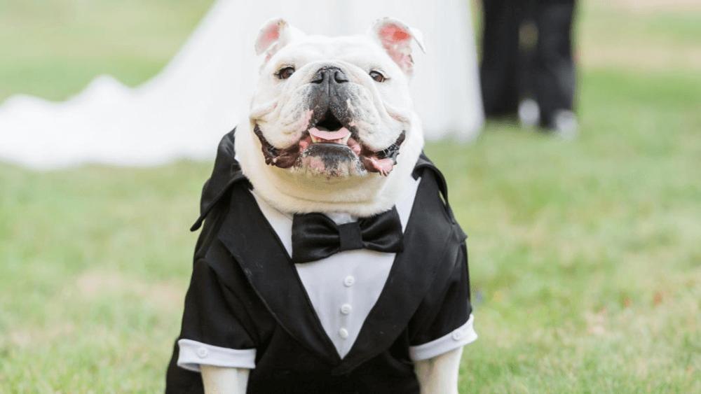 Riscos da Humanização Em Cães
